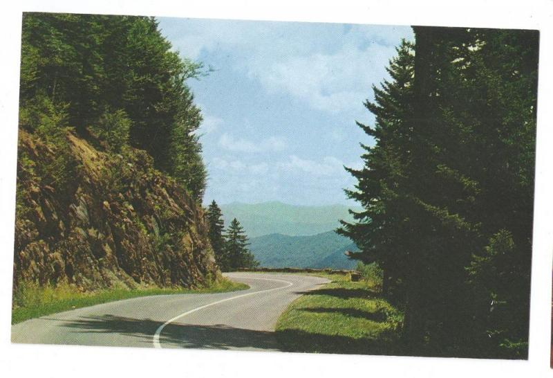 Clingmans Dome Highway Smoky Mountains Park Road Postcard