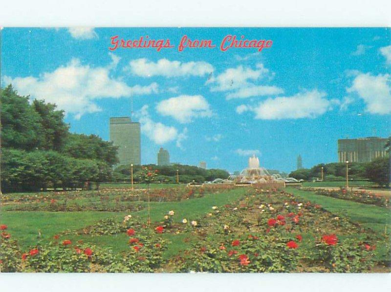 Pre-1980 GARDEN SCENE Chicago Illinois IL AF6429