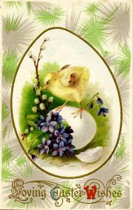 Greeting - Easter. Chick(s)