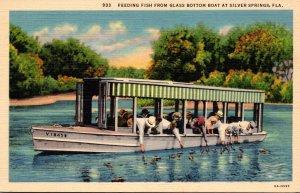 Florida Silver Springs Feeding Fish From Glass Bottom Boat Curteich