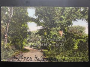 Hertfordshire: Stevenage, REDCOATS LANE c1906