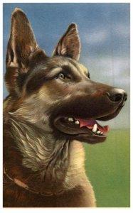 Dog  German Shepard  artist signed Alfed Mainzer