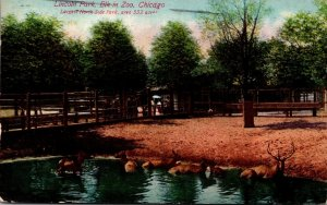 Illinois Chicago Lincoln Park Zoo Elk 1910