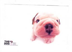 Close Up Picture, Puppy, #16 of 20, 1940-1960s