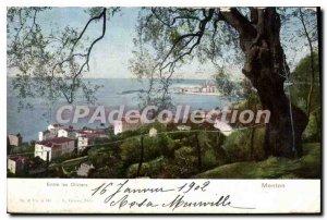 Old Postcard Menton Between Les Oliviers