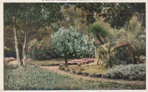 California Santa Barbara A Cactus Garden