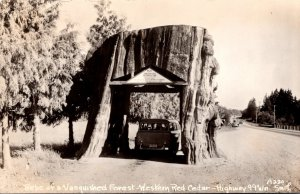 Washington Highway 99 Western Red Cedar Drive Thru Stump Real Photo