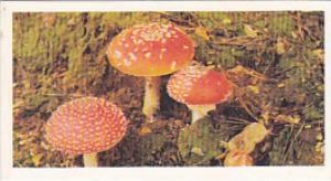 Brooke Bond Vintage Trade Card Woodland Wildlife 1980 No 24 Fly Agaric