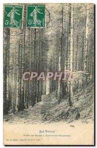 Old Postcard The Forest Vosges Sapine has Kichompré Gerardmer