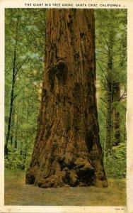 CA - Santa Cruz County. Big Trees Park