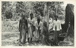 british north borneo, SABAH SANDAKAN, Bode Rubber Estate, Coolies Tapping 1930s