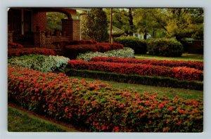 McComb MS-Mississippi, Annual Lighted Azalea Trail, Chrome Postcard
