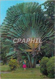 Postcard Modern Saint Barthelemy Traveler's Tree