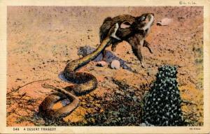 Rattlesnake Killing a Rabbit.