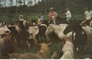 CHINCOTEAGUE, Virginia, 1940-60s; Round-up at the Annual Pony-Penning