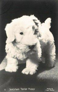 Vintage Real Photo Dog Postcard, Sealyham Terrier Puppy Photo by Hugh Morton EC3