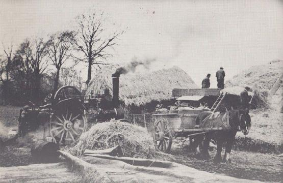 Farm Threshing in 1945 WW2 Era Rare Hertfordshire Tractor Farming Postcard
