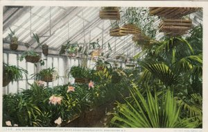 WASHINGTON D.C. , 1900-10s ; Mrs Roosevelt's Orchid Collection, White House