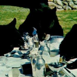 3 Bears Coffee Break Eating Drinking Table Canadian Rockies RPPC Banff Alberta