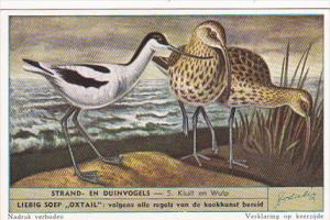 Liebig S1610 Birds Of Beaches and Dunes No 5 Kluit en Wulp