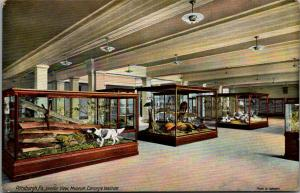 Pittsburgh PA~Carnegie Institute Museum~Interior~Hunting Exhibits~Dog Point~1910