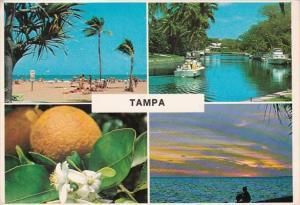 Florida Tampa Multi View