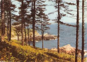 uk6157 pine forest st martins guernsey uk