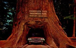 California Underwood Park On Redwood Highway Chandelier Drive-Thru Tree