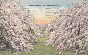 Virginia Winchester Apple Blossom Time 1951