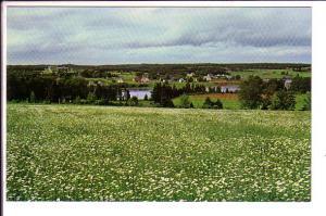 Field of Daisies, Cardigan, Prince Edward Island, Canada,