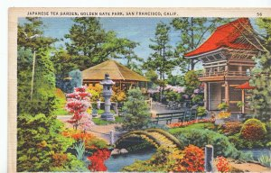 America Postcard - Japanese Tea Garden - San Francisco - California   V1355