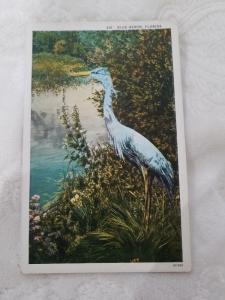 Antique Postcard entitled Blue Heron, Florida  Probably 1915-1930.