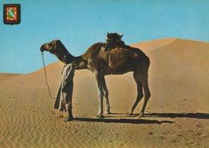 Western Sahara Postcard - Aaiun - Camel - A Stop Between The Downs RR9373