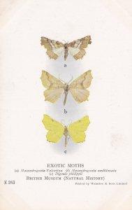 Digonis Philippi Philippines Maeandrogonia Rare Exotic Moths Postcard