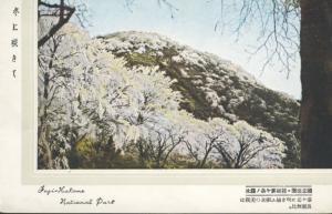 Fuji-Hakone-Izu National Park Honshu Japan Landscape Unused Vintage Postcard D5
