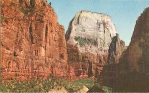 The Great White Thorne, Zion National Park, Utah old unus...