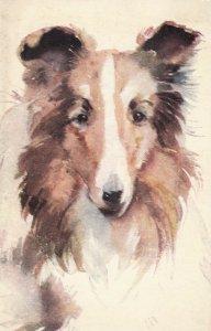DOG ; Collie , 1930s