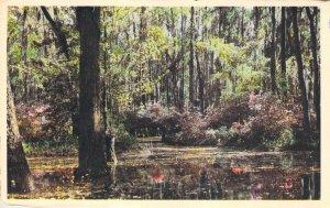 Postcard Cypress Gardens Oakley SC US Route 52 Talio-Crome Unused A1