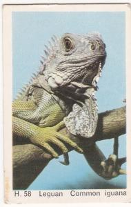 Trade Card Dandy Gum Wild Animals H 58 Common Iguana