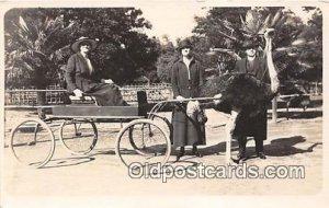 Real Photo Year 1919 Ostridge Farm Los Angelas, CA USA Writiting on back