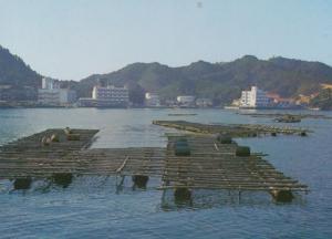 Pearl Raft on Toba Bay Japan Japanese Postcard