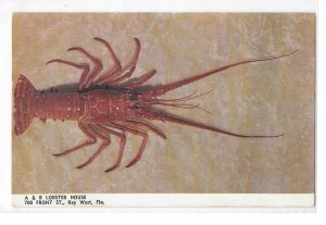 Key West FL Seafood Restaurant A & B Lobster House Vintage Postcard