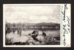 VT Pine Hill Pond Killington Pico Shrewsbury Rutland Vermont Postcard Vintage