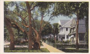 Crooked Tree, Magnolia Avenue, DAYTONA, Florida, 00-10s
