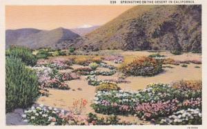 California Springtime On The Desert