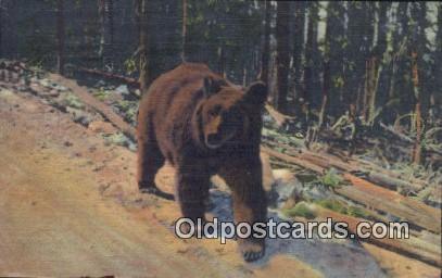 Bear Postcard Post Card Old Vintage Antique Bears