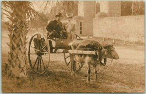 RPPC Real Photo Postcard Man & Woman Tourists in Bull / Ox Cart c1910s Unused
