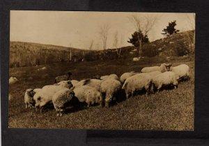 ME Sheep Bangor and & Boston RPO Real Photo RPPC Postcard Maine
