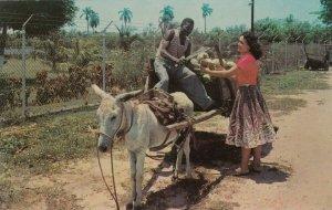 JAMAICA , 1950-60s; Donkey pulled Coconut Wagon