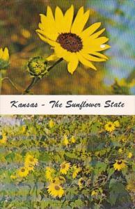 Kansas State Flower is The Sunflower State Kansas
